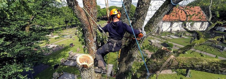 Why You Should Hire an Experienced and Qualified Arborist