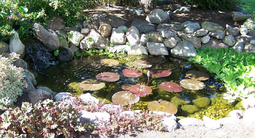 How to Turn Your Garden into an Aquatic Paradise