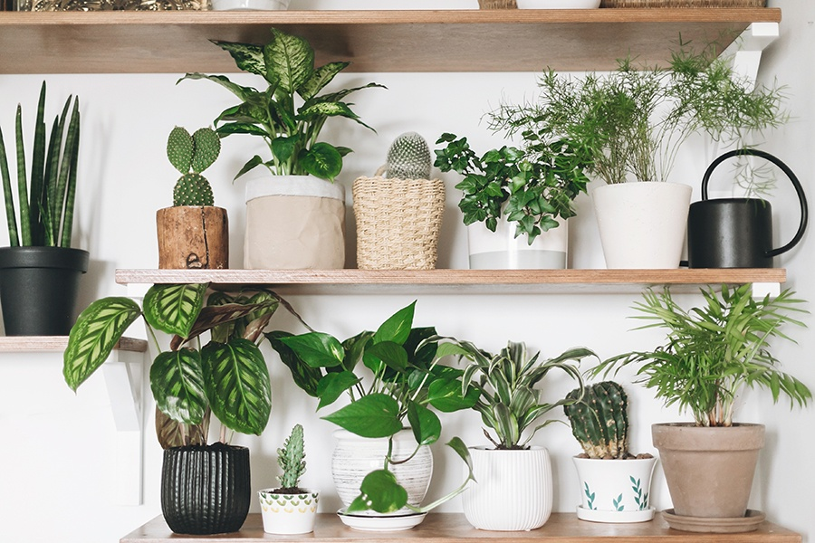 Why indoor plants are a natural mood booster