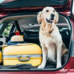 Ways That You Can Keep Your Dog Safe While Traveling