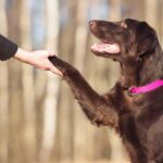 How to Train Your Dog: 4 Helpful Teaching Tips